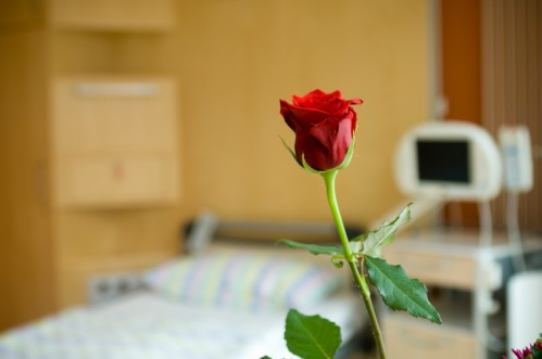 Rose am Krankenbett